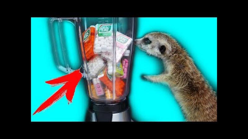 Что Если Смешать ВСЕ Вкусы Tic-Tac в Блендере ?! Сурикат пробует новое Смузи - YouTube