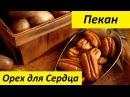 Пекан Экзотический Орех для Сердца
