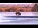 Приколы. Охота на кабана по льду.