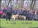 бугар(грузия)-тарзан(осетия)