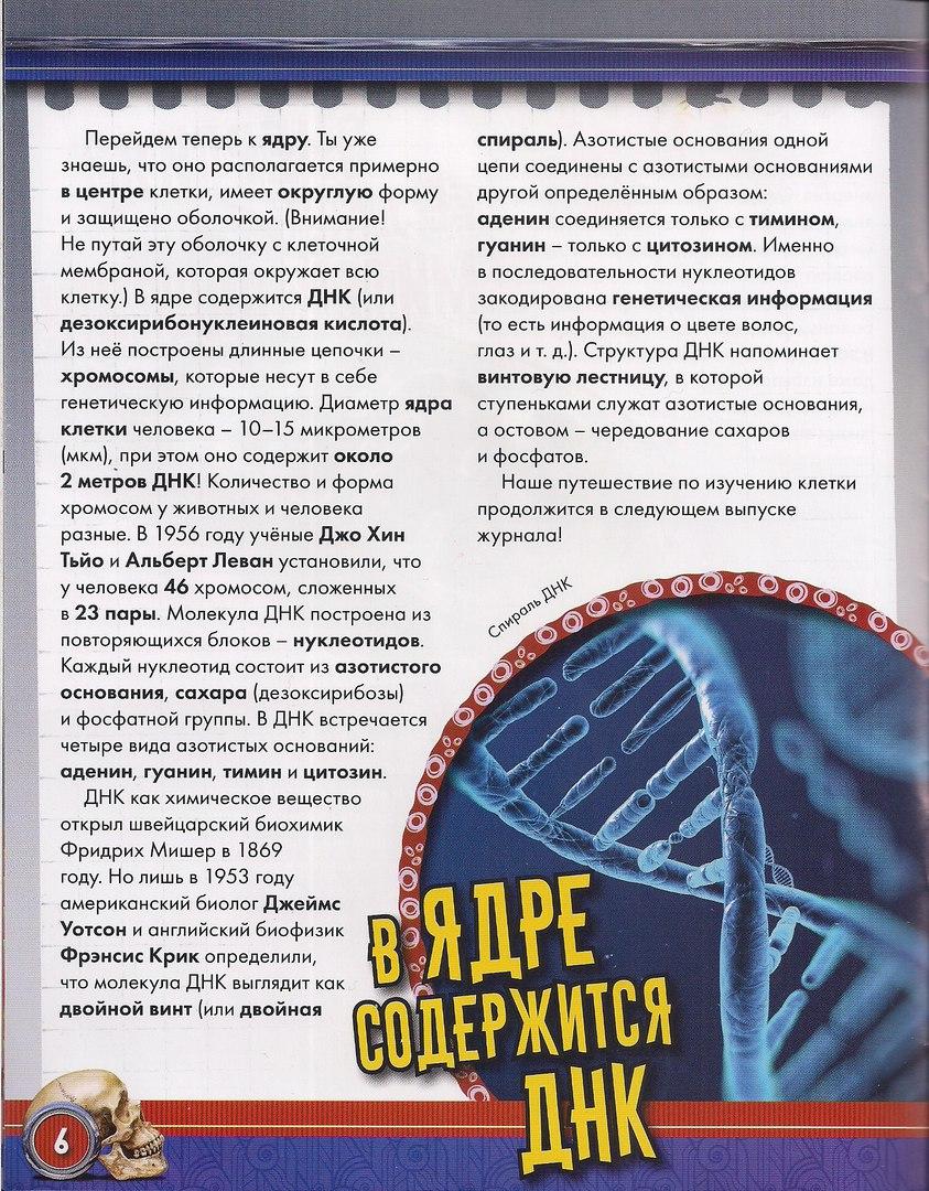 Возможные журнальные серии от Centauria