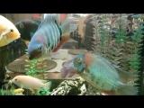 Море рыбок и море спокойствия))))))................