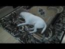кошка и лабрадор любовь во имя течки