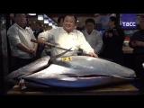 Почем рыбка, или сколько отдали за 405 кг тунца в Японии