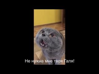 Кот говорит_ Голова моя болит