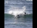 Ухты дельфины...Да бл...