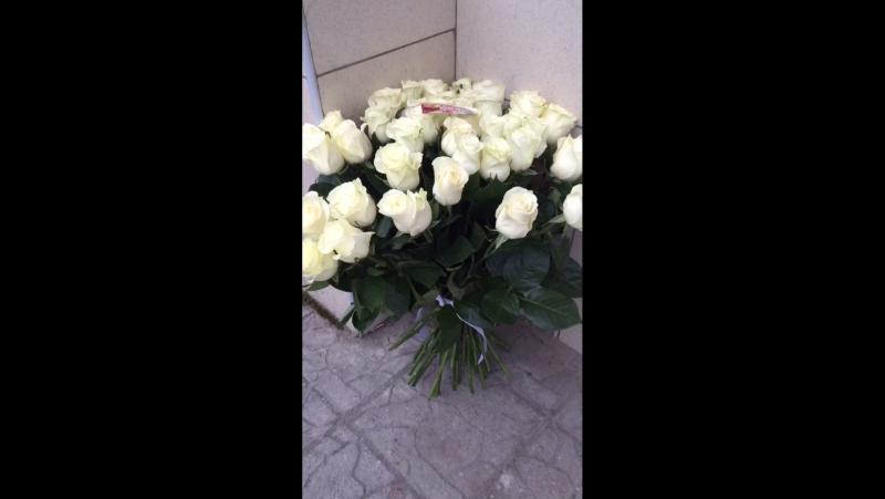 41 роза мондиаль