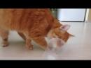 Кот и стаканчик, где была валерьянка)