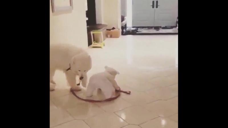 Два белых медвежонка