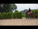 Nilo - испанская лошадь