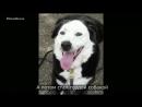 Когда собака спасает человека