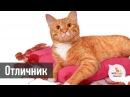 Кот Отличник, 2 года приют Муркоша