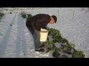Под рождество на огород за урожаем