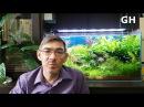 Основные показатели воды в аквариуме и подготовка воды для растительного аквар