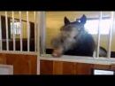 Ржачная лошадь Funny horse