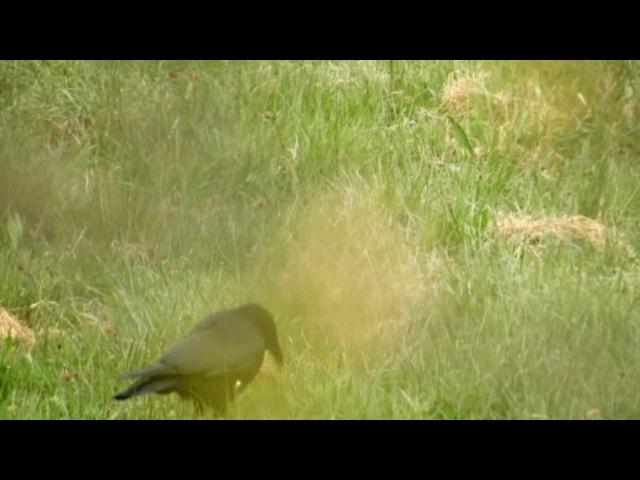 В мире животных Птицы