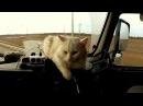 Italo disco 80s. Momento - I usеd Love Cat Driver. Magic walking Extreme fantasy travel mix