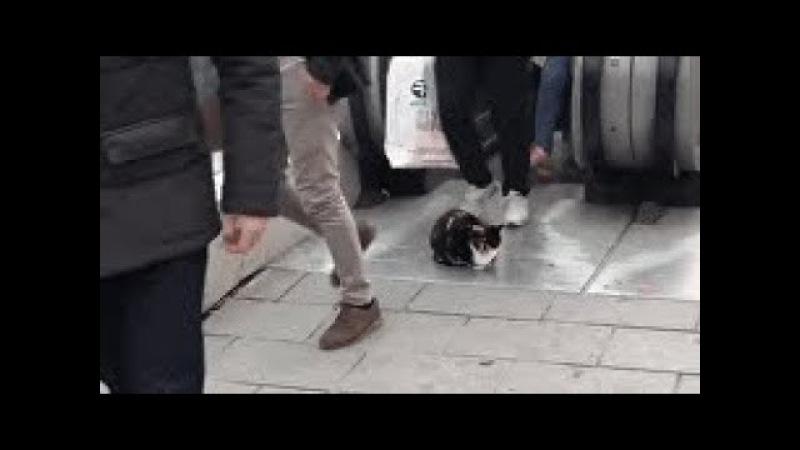 В центре Стамбула кот заблокировал выход с эскалатора