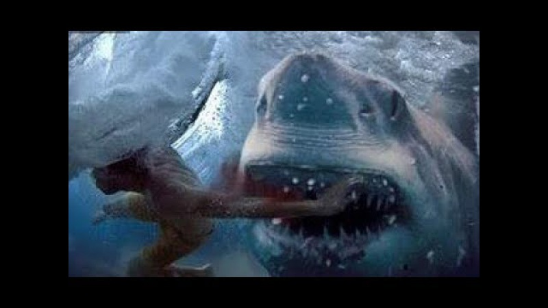 ПОЧЕМУ АКУЛЫ НАПАДАЮТ НА ЛЮДЕЙ. Нападение акул на людей - Документальный фильм