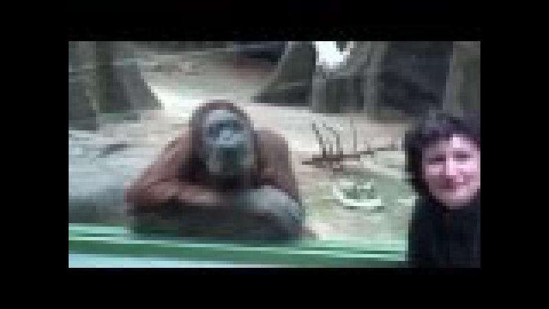 Мудрые обезьяны наблюдают за людьми в зоопарке