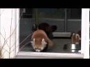Красная панда испугалась