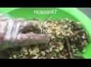 How To Make Indian Carp Bait(125)Corn Silage -Fishing Tips - Cách Làm Mồi Chép Trôi với Ngô Chua .