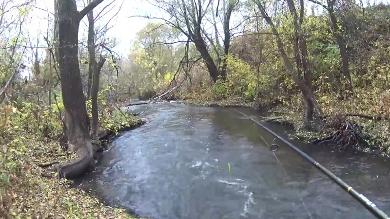 Нифига себе, какие кабаны клюют в этом ручье! Рвем сети местных! Рыбалка на спин