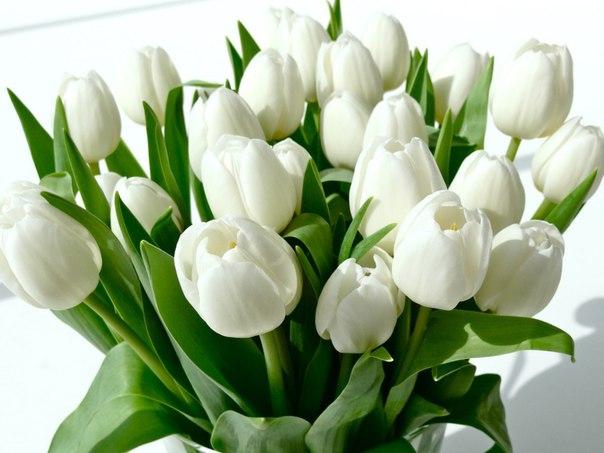С прекрасным цветочным днем, дамы🌸Никогда себе не отказывайте в возм