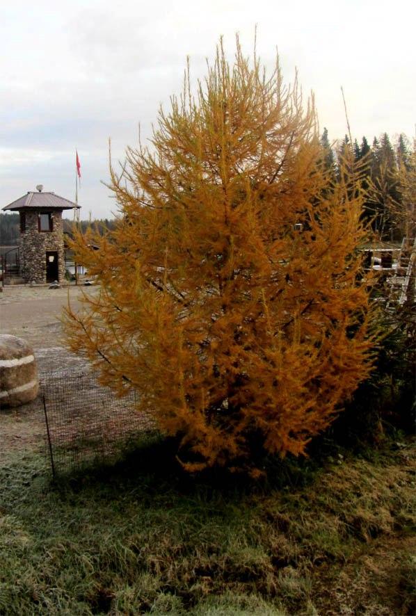 Обзоры: Из Лютой Осени сквозь Буран на север к Мягкой Осени.