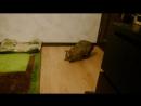 Лайма и мышь