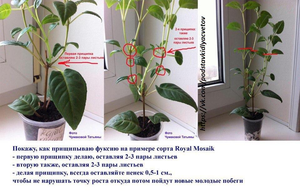 статьи о растениях из  газет и журналов - Страница 7 EvAlLBdtdIk