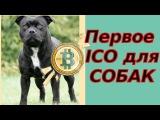 Первое ICO для собак | Интервью с CEO Zkylos
