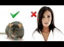 Почему мужчины предпочитают серых мышек Пробуждение Мужчин