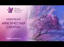 Восстановление энергии Медитация Магическая Сакура