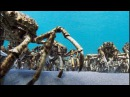 Army Of Spider Crabs Shed Their Shells Blue Planet II