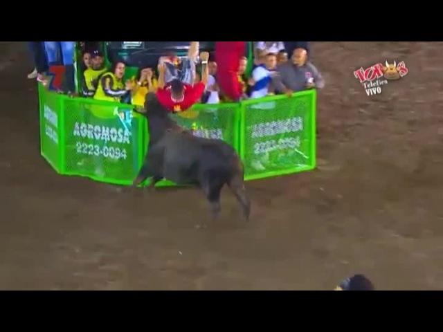 Bull Striker · coub, коуб