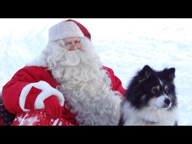 Santa Claus Reindeer dog in Lapland video to children: Finnish Lapphund Father Christmas kids