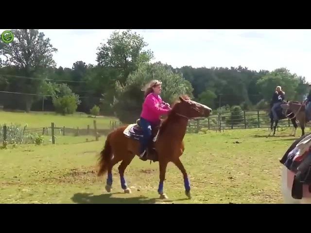 John cenas horse