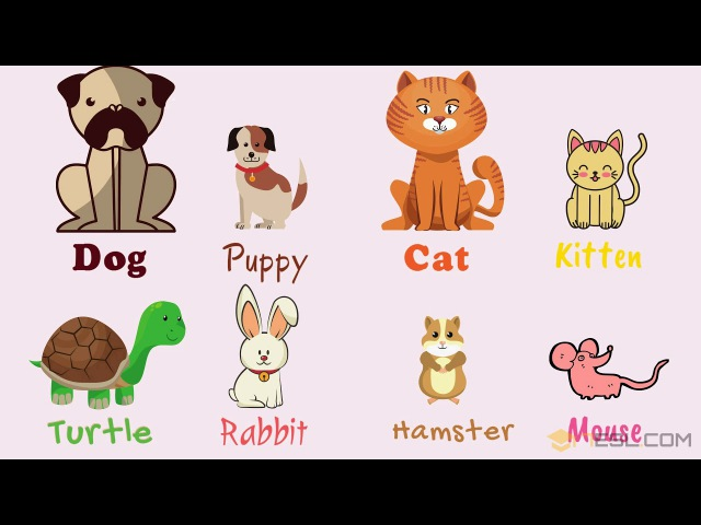 Kids Vocabulary Learn Pet Names Pets Vocabulary in English