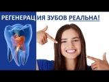 Регенерация зубов - наша реальность! Аркадий Петров