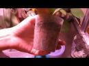 Как поливать орхидеи которые продолжают расти в плотноутрамбованном мхе