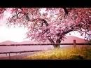 Relaxing Piano Music Romantic Music Beautiful Relaxing Music Sleep Music Stress Relief ★122