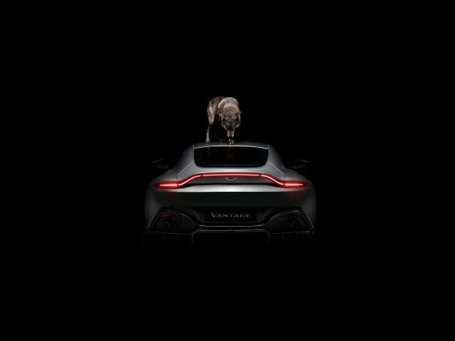 Beautiful Won't Be Tamed - The New Vantage | Aston Martin | Rankin