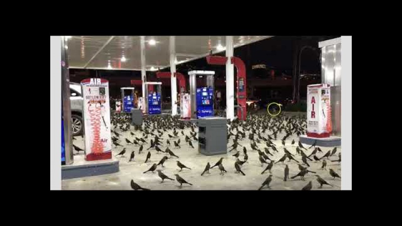 Huge flock of Grackles land at fuel station after midnight! - Dazzle Dallas Sky