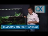 Awesome Tips and Tricks Oliver Knott Aquascaping empfiehlt Helfer gegen Algen im Aquarium