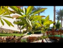 Египет. Шарм-ель-Шейх. Отель Royal Grand Sharm 5 16 января 2018г.