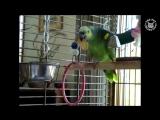 Подборка смешных видео с птицами
