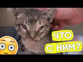 Котик чуть не погиб!
