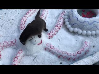 Волонтёры зоопарка порадовали выдру снежным обогащением вольера