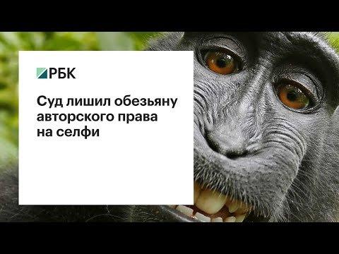 Суд лишил обезьяну авторских прав